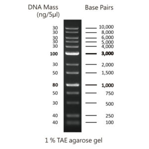 MWD1 - DNA ladder with 13 bands