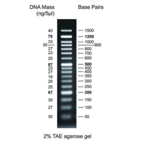 MWD50 - 50 bp DNA ladder with 17 bands