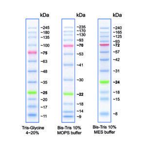 MWP04 BlueStar PLUS Protein Marker - map