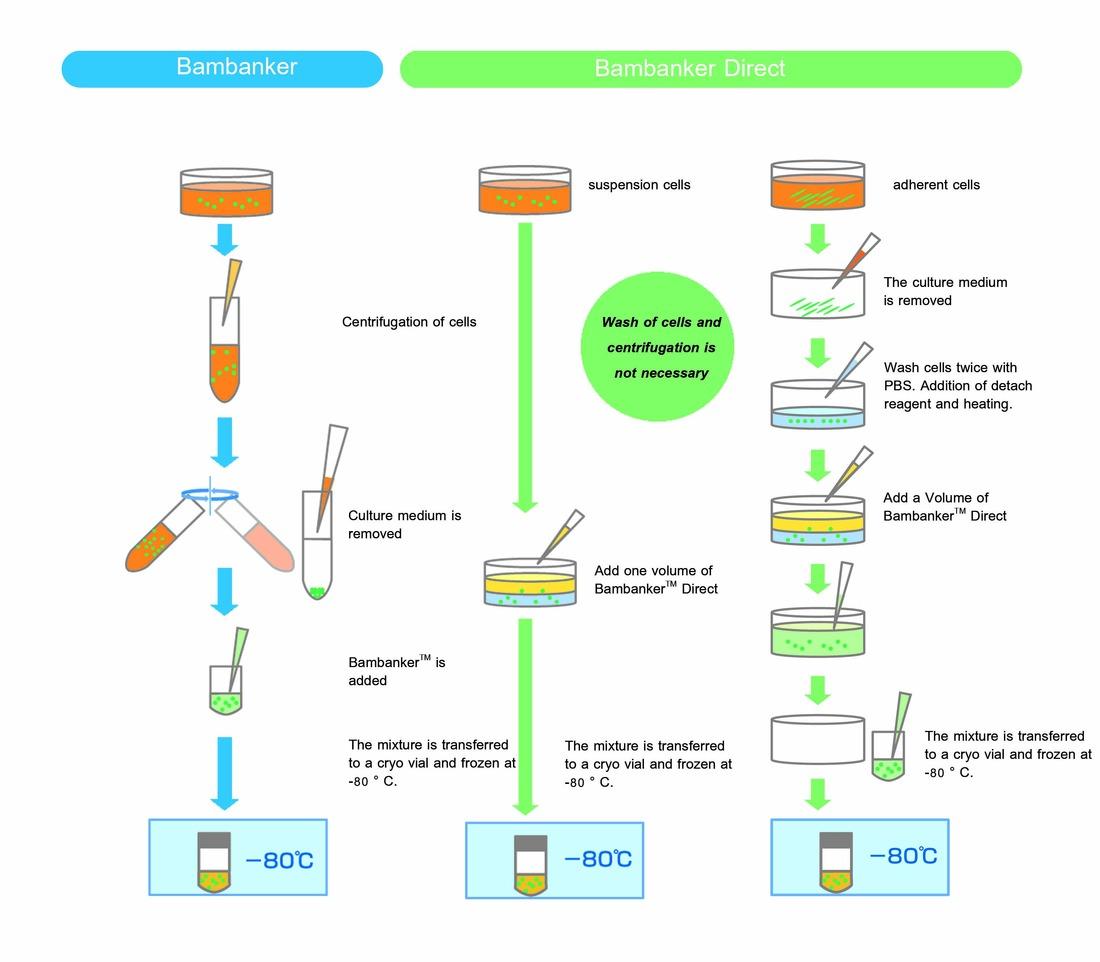 Vergleich des Protokolls für Bambanker und Bambanker Direct