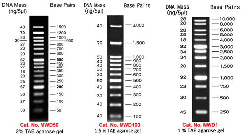 Separation of DNA fragments using different DNA marker