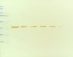 membrane image